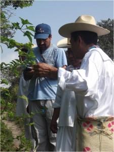 Recherche-action participative – Au nord de Veracruz, au Mexique, le Centre de recherche sur les tropiques de l'Université de Veracruz applique le principe de restauration agroécologique à ses recherches tout en collaborant étroitement avec les organisations autochtones et les communautés locales à toutes les étapes de ces dites recherches.