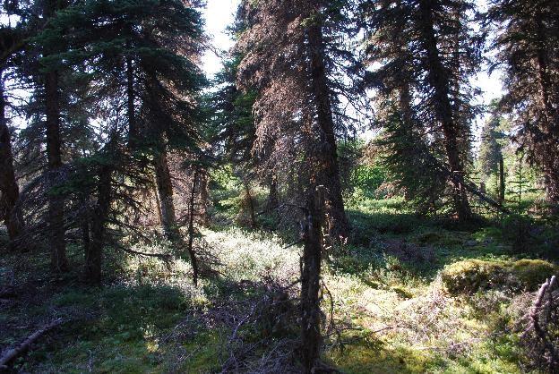 Wemindji forest. Source: Katherine Scott.