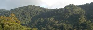 Rainforest, Trinidad. Source: Andrew Hendry